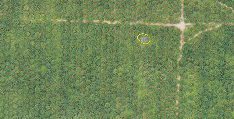 drone untuk foto udara tanaman mati